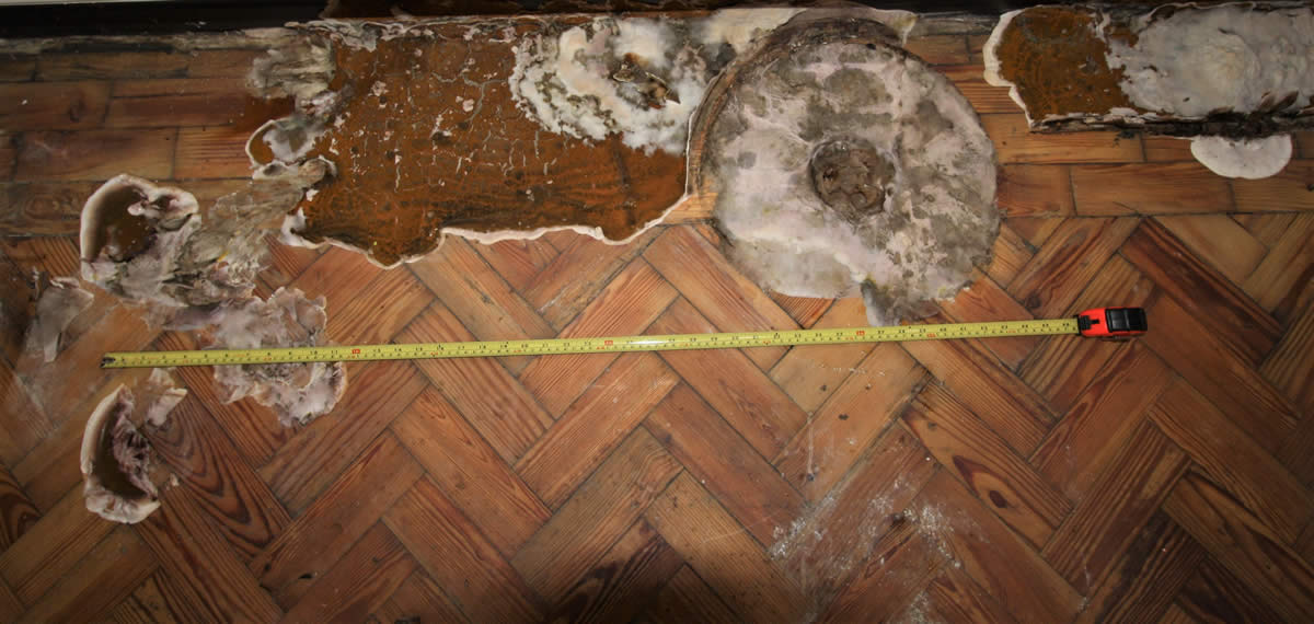 Dry rot on a wooden floor with lino - Nicholson Price Associates