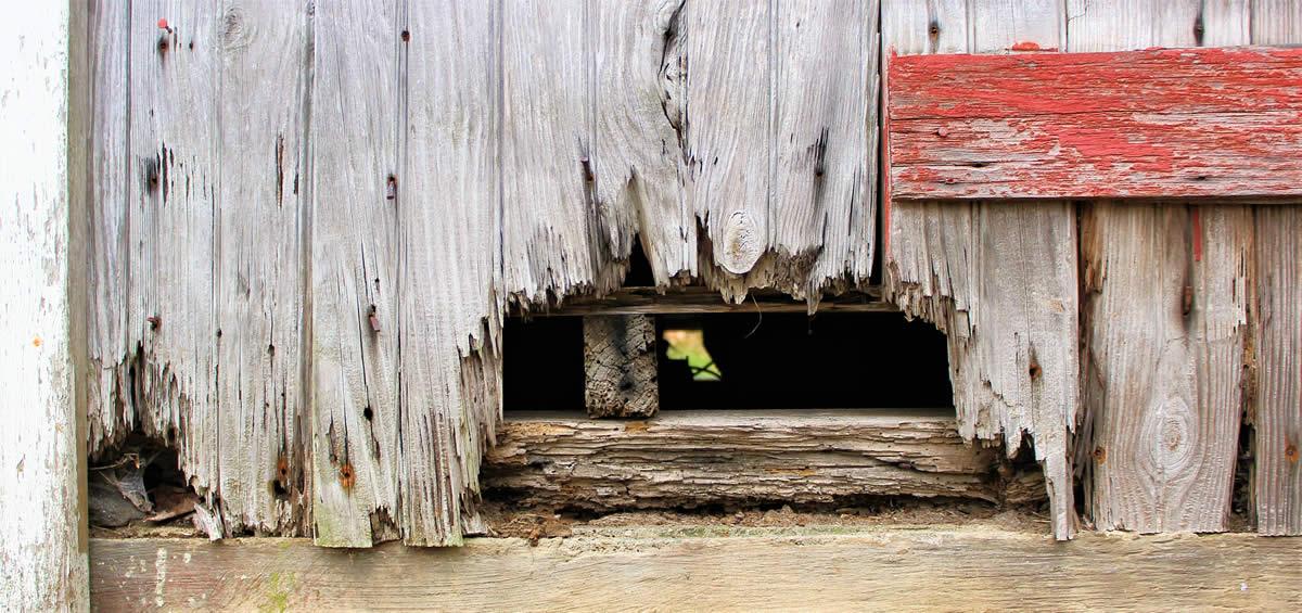 Wet Rot - damp & timber surveys - Nicholson Price Associates